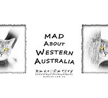 Mist - MAD About Western Australia by Dave Catley
