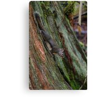Just a stump nothing to see here Canvas Print