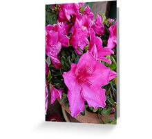 Azalea Pinks Greeting Card