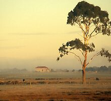 A red roof in Gippsland by granart