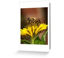 Pollen Feast Greeting Card