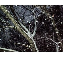 Trees In The SnowStorm Photographic Print
