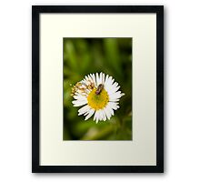 Bug on Flower Framed Print