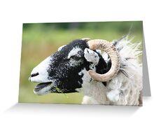 Laughing Sheep Greeting Card
