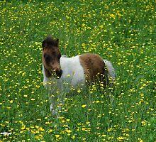My Little Pony by Jamie Lee