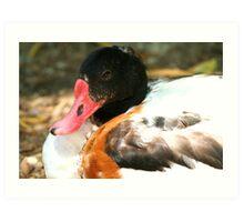 Sir Duck Art Print