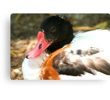 Sir Duck Canvas Print