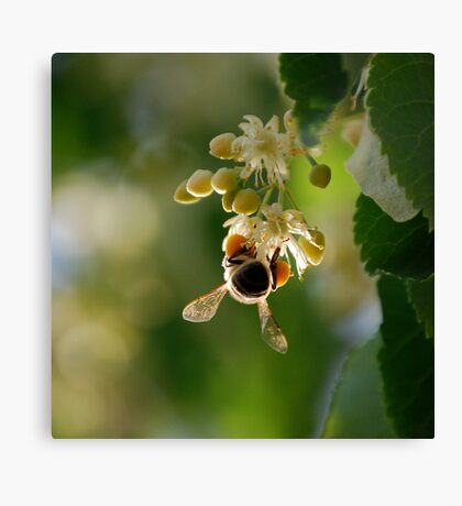 The Pollinator   Canvas Print