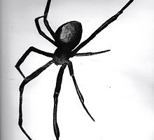 Redback Spider by E Creations
