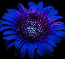 UV Induced Bio-luminescence 2 by AKunde
