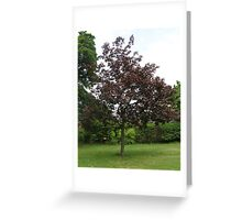 Uncommon Red Sycamore Greeting Card