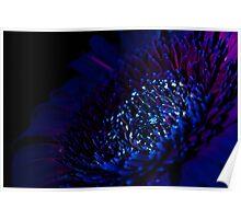 UV Induced Bio-luminescence 4 Poster