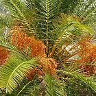 Palm Tree in Seed by Rosalie Scanlon