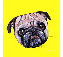 Butch the Pug - Yellow Photographic Print