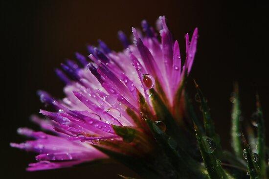Flower Drops by BluAlien