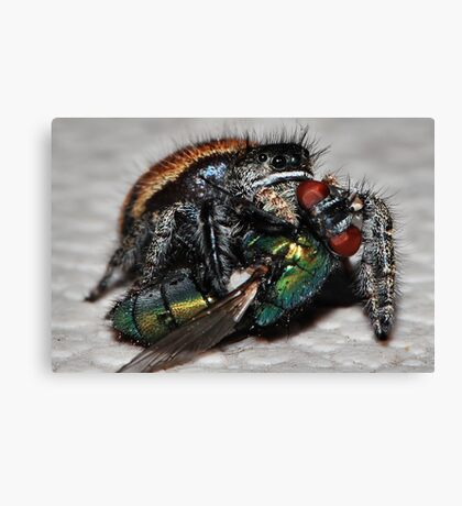 Jumper and The Fly Canvas Print