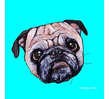 Butch the Pug - Cyan Photographic Print