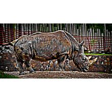 Old Rhino Photographic Print