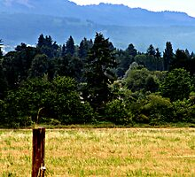 Lone Fence Post by Amy  Briner