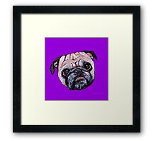 Butch the Pug - Purple Framed Print