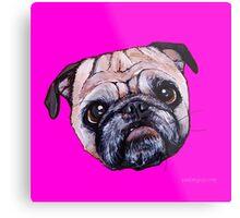 Butch the Pug - Pink Metal Print