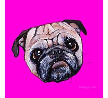 Butch the Pug - Pink Photographic Print