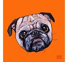 Butch the Pug - Orange Photographic Print