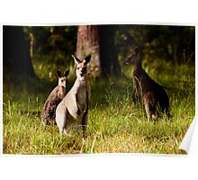 3 Roos Poster