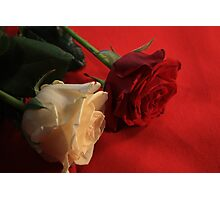 Red and White rose Photographic Print