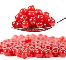 Red currant on white background by naturalis