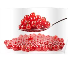 Red currant on white background Poster