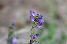 Purple Flower by Jonathan Bartlett