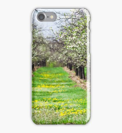 Orchard of plum trees iPhone Case/Skin