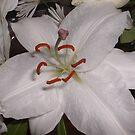 White Lily by Susan E. King