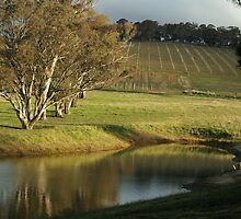 Vineyard - near Orange, NSW by Alison Howson