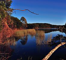 "Cooloolabin lake by Phineous ""Flash""   Cassidy"