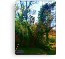Lost Thicket Canvas Print