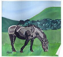 Horse At Hendra Poster