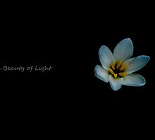 The Beauty of Light by T A Joseph