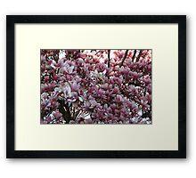 Magnolia In Full Bloom Framed Print