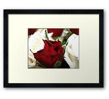 White Red White Framed Print