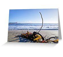 Seaweed ~ Lyme Regis Greeting Card