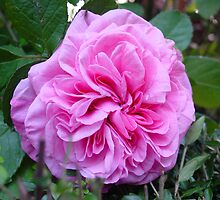 Gertrude Jekyll ii by Richard Elston