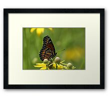 Butterfly and Blooms..2 Framed Print