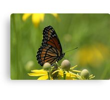 Butterfly and Blooms..2 Canvas Print