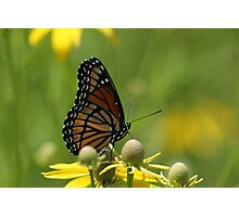 Butterfly and Blooms..2 Photographic Print