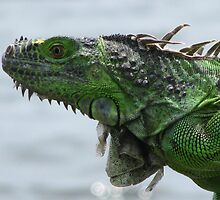 modern dinosaur by paulscar