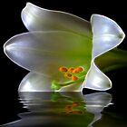 Easter Lily by BigD