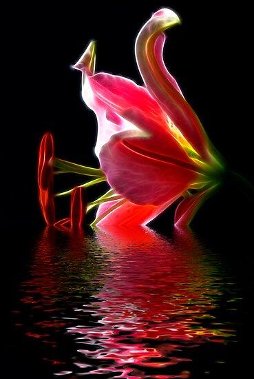 Star Gazer Lily by BigD