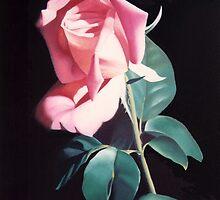Peach Colored Rose by Teri Rosario